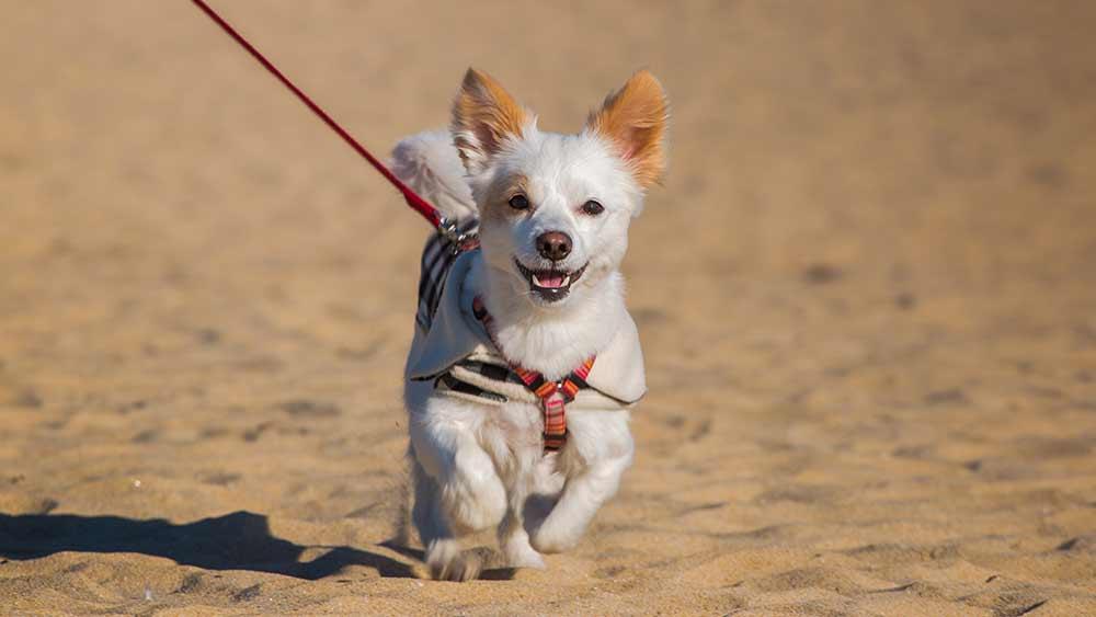 Urlaub mit Hund